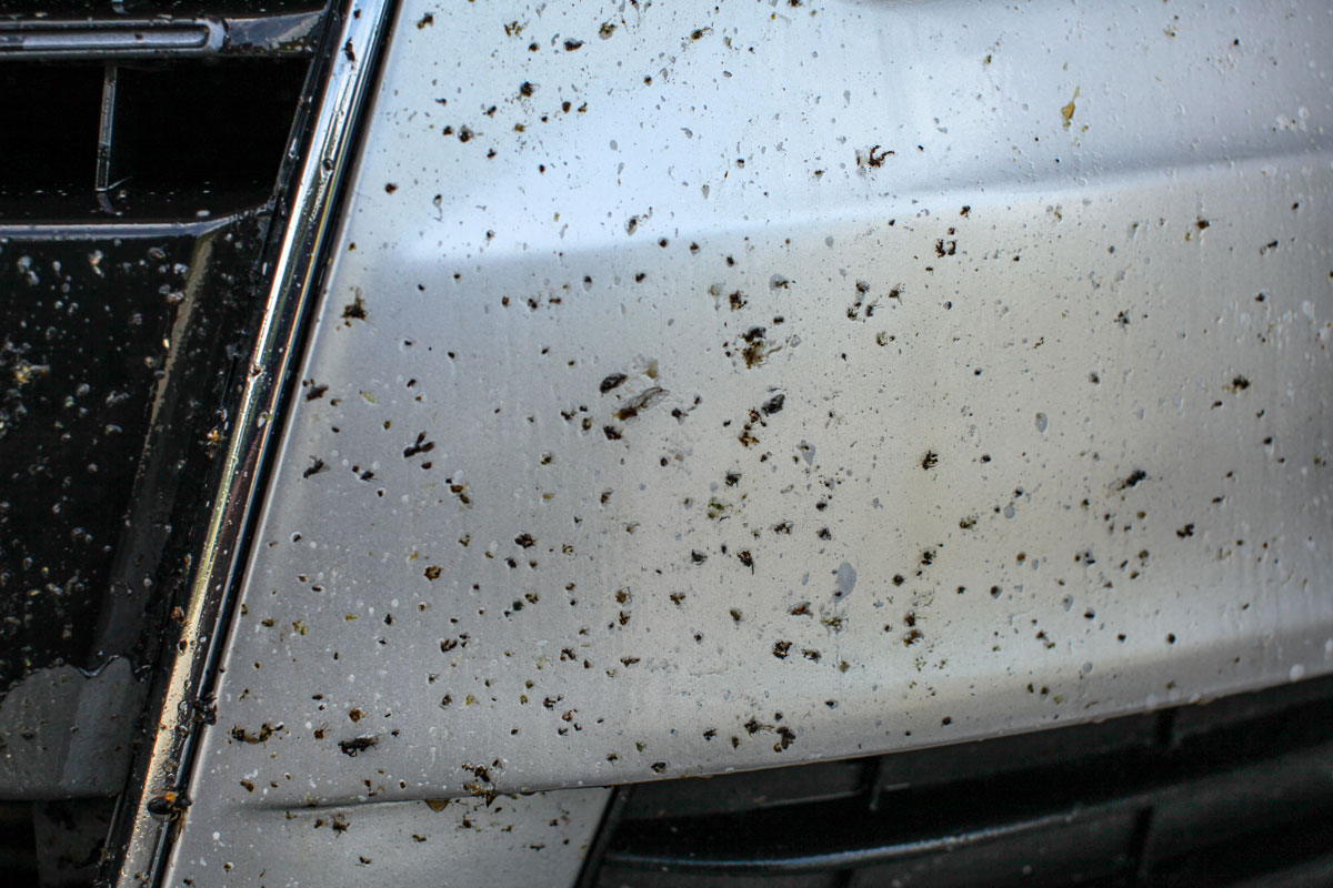 How to easily remove bugs on car